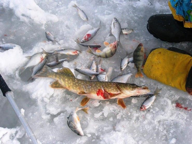 на что ловить на озере неро